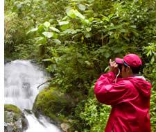 Ornithologie dans Chiriqui