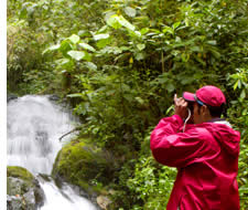 Birdwatching in Chiriqui